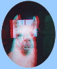 Anaglyph of llama in barn doorway
