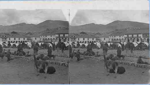 Stereoview picture of llamas in Peru
