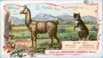 The World of Mammals card