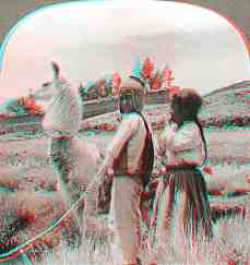 Anaglyph stereoview picture of a llama in Bolivia