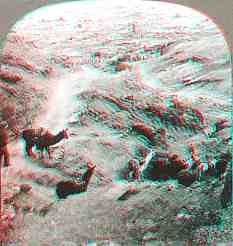 Anaglyph stereoview picture of llamas in Bolivia
