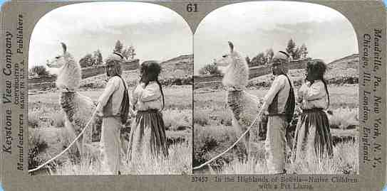 Stereoview picture of a llama in Bolivia