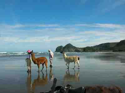 Geoff and Jenny on beach with llamas