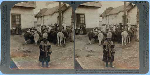 Stereoview picture of pack train
