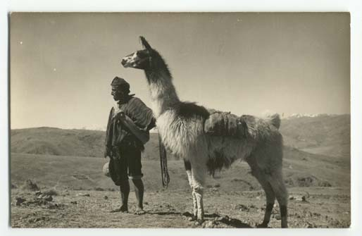 Indian with llama