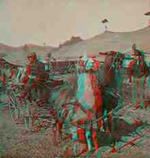Stereoview picture of llamas pulling cart in a circus in Bisbee, Arizona