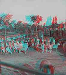 Anaglyph stereoview picture of llamas in Buenos Aires zoo